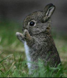 This little guy applauds the EU ban.